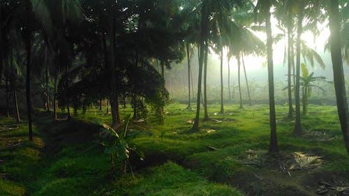 Fotos de stock gratuitas de arboles, césped, con niebla, hierba