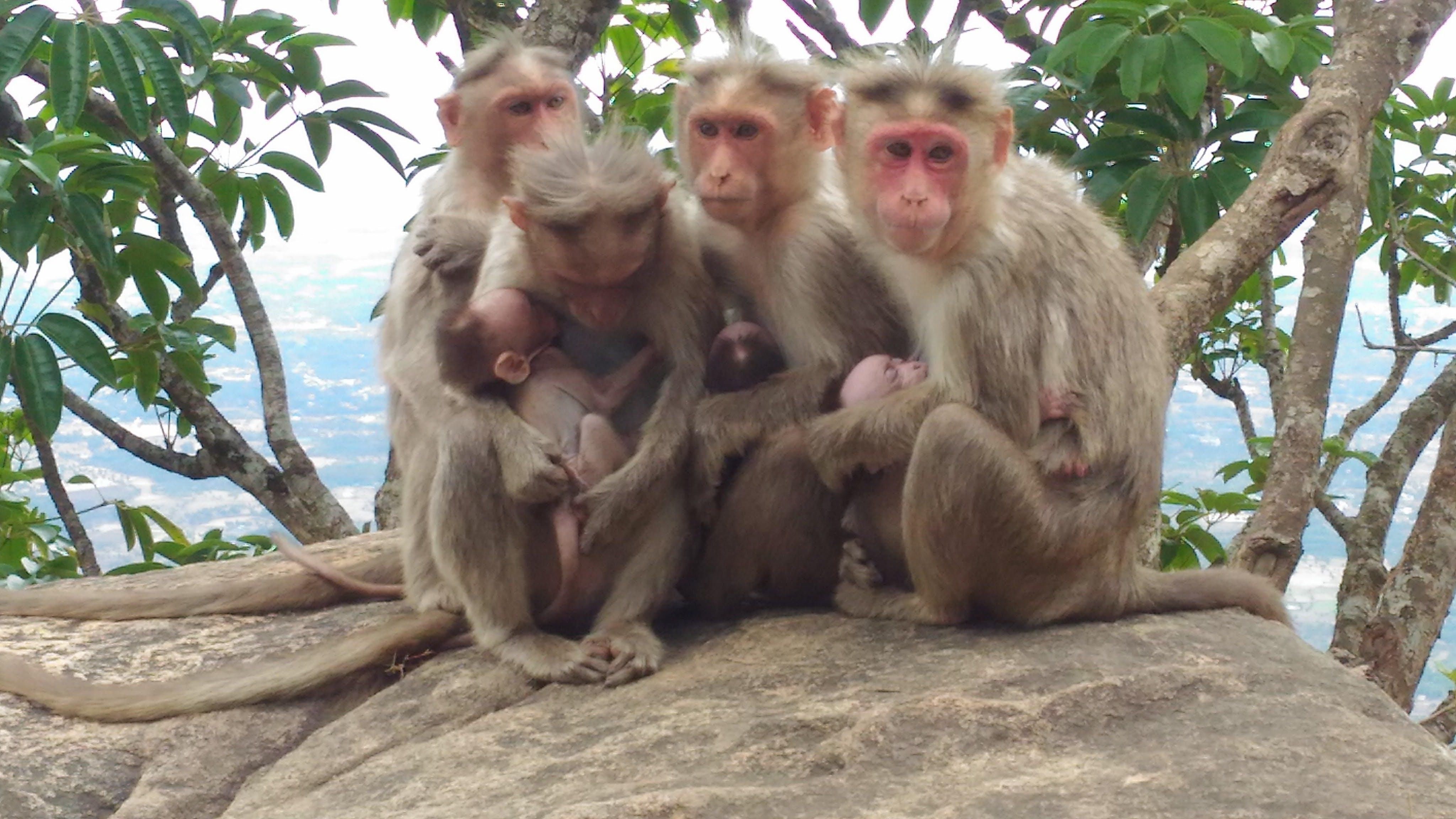Free stock photo of kerala, mother nature, motherhood