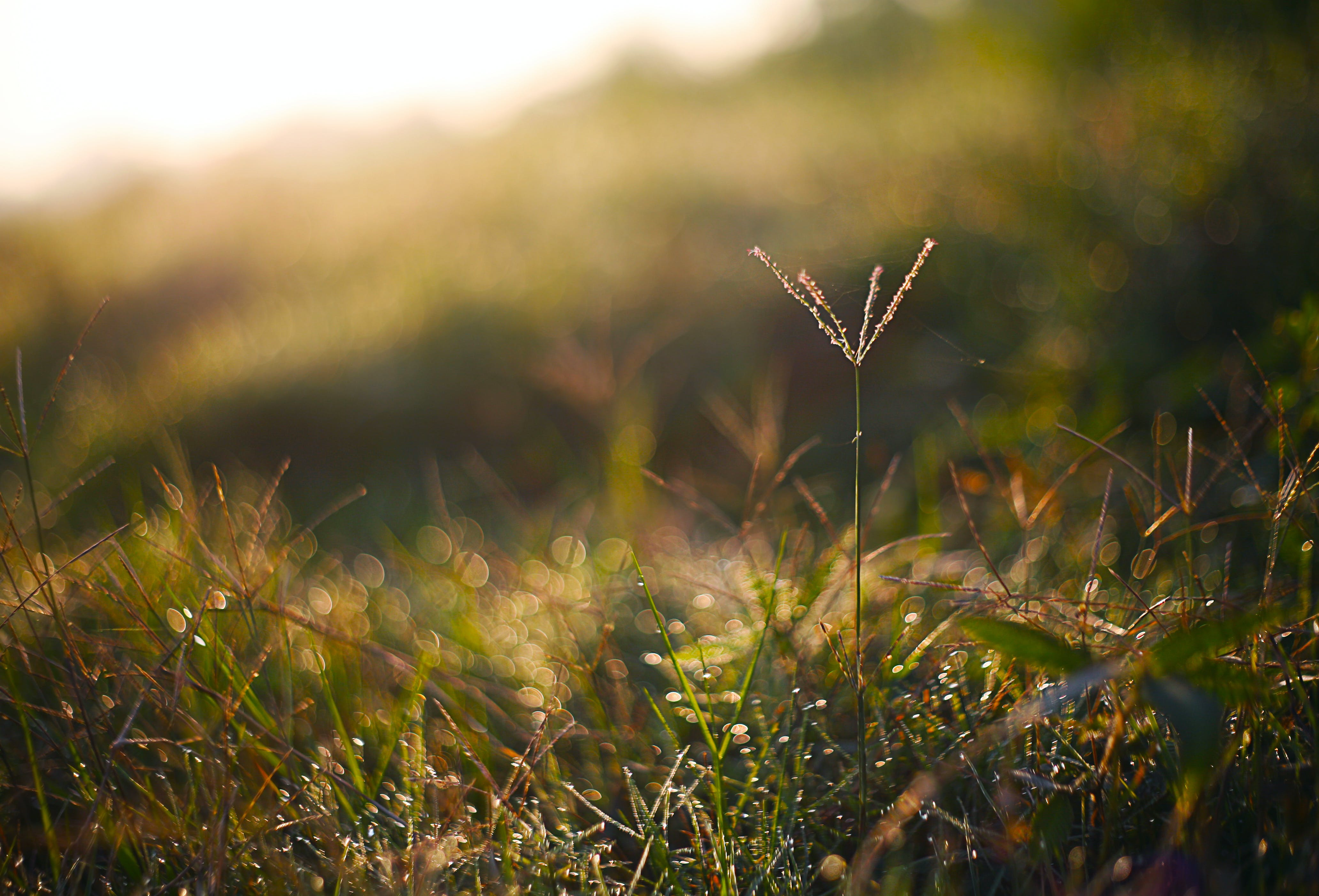 Tilt-shift Photography Of Grass