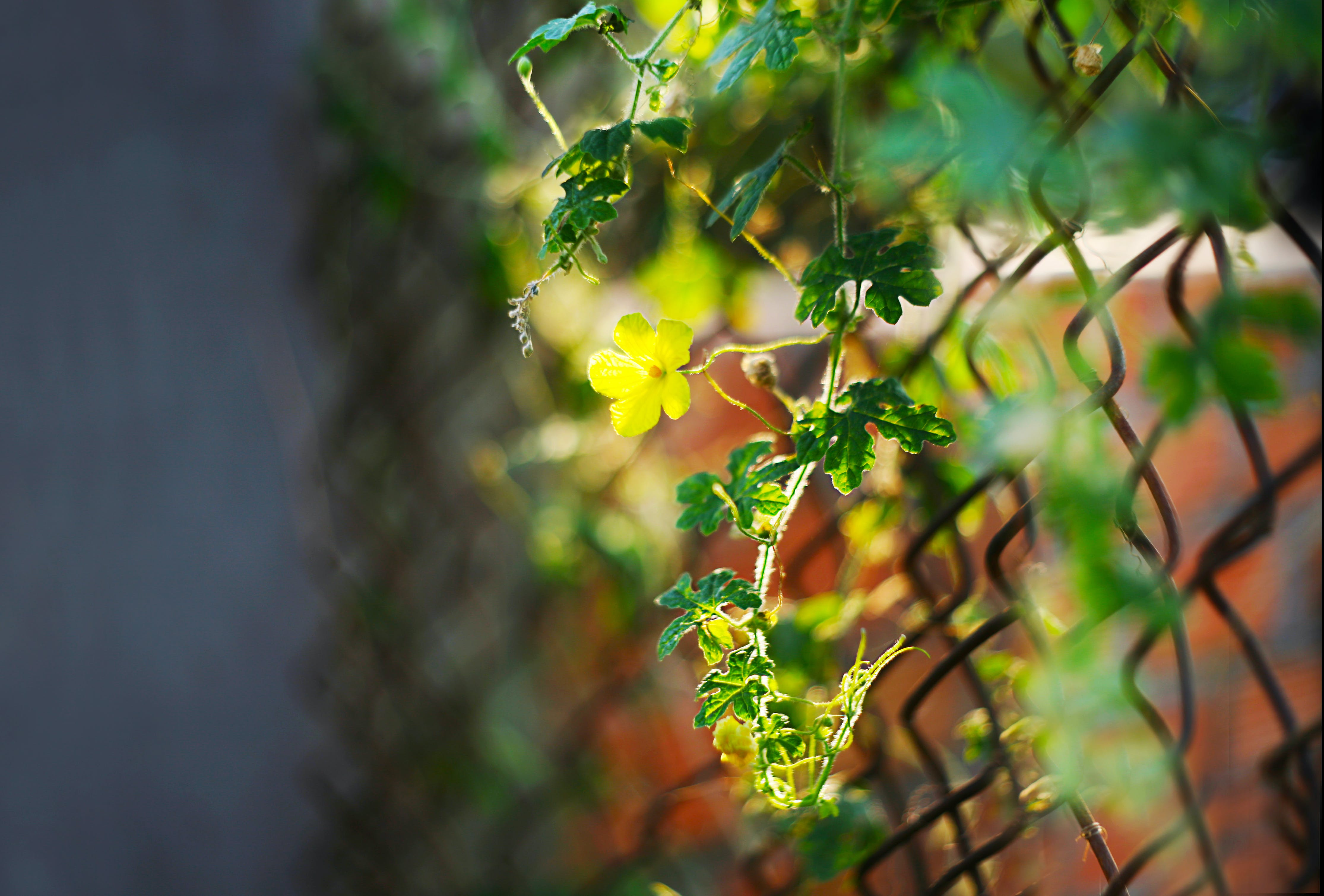 Shallow Focus Photography of Green Plants