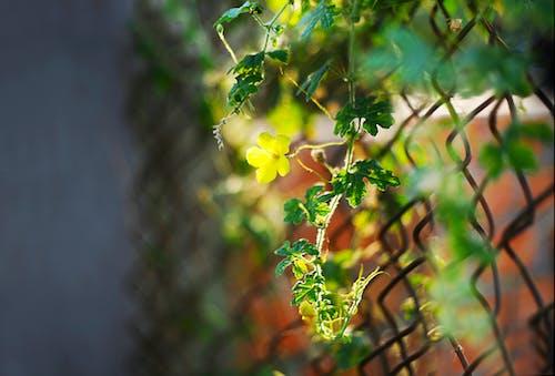 꽃이 피는, 색깔, 성장, 식물군의 무료 스톡 사진