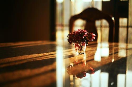 Бесплатное стоковое фото с ваза, глубина резкости, отражение, флора