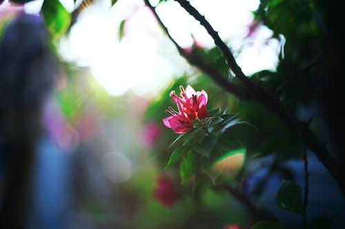 매크로, 식물, 식물군의 무료 스톡 사진