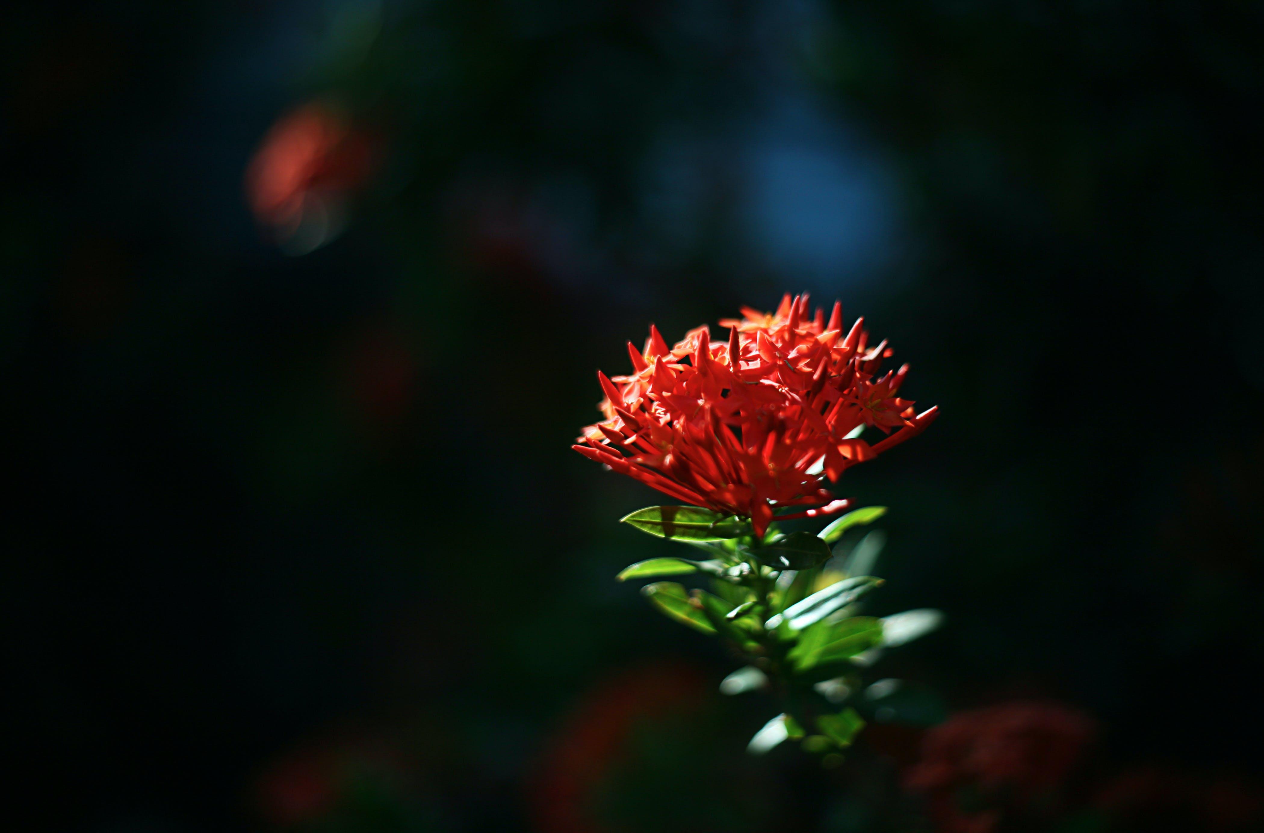 Gratis lagerfoto af blomst, blomstrende, close-up, farve