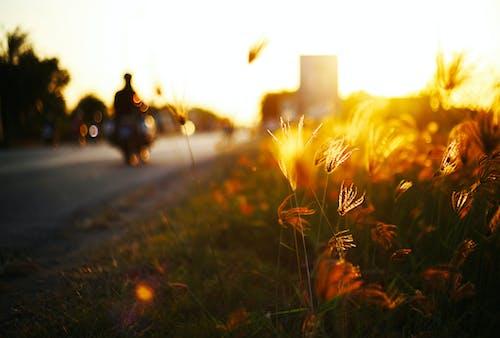 가벼운, 경치, 골드, 새벽의 무료 스톡 사진