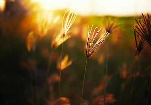가벼운, 골드, 들판, 식물군의 무료 스톡 사진