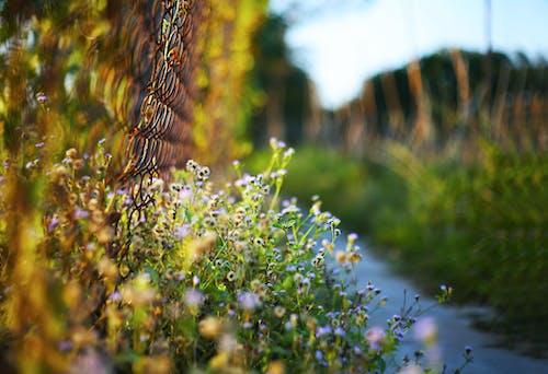 가벼운, 경치, 꽃, 새벽의 무료 스톡 사진