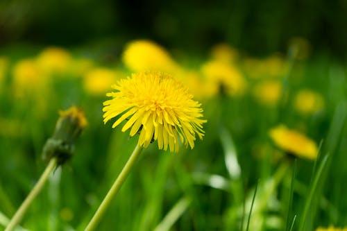 Gratis lagerfoto af blomster, grøn, gul, makro