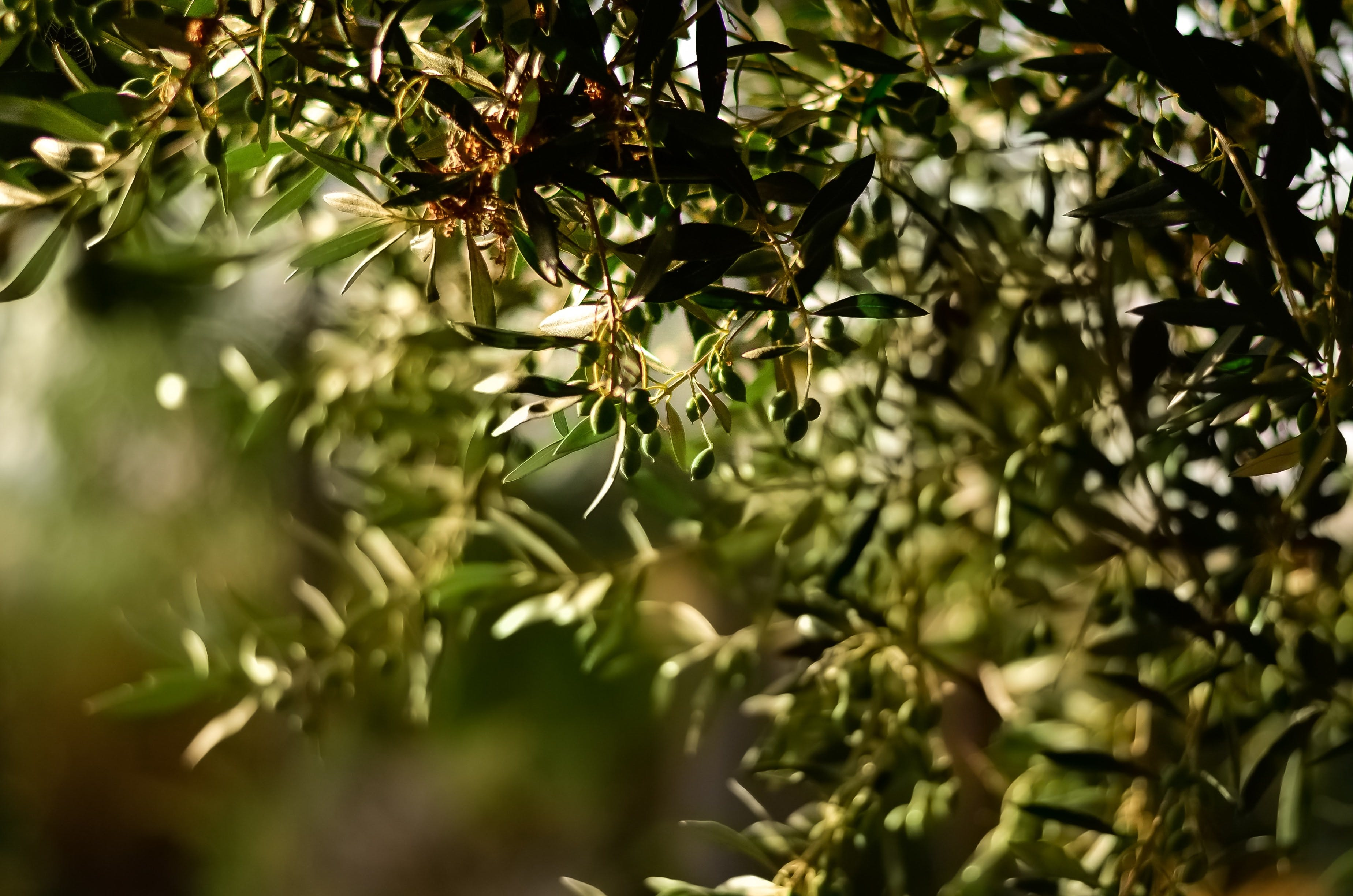 Focus Photography of Green Plants