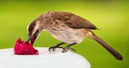 Foto profissional grátis de alimentação, animais selvagens, animal, asas