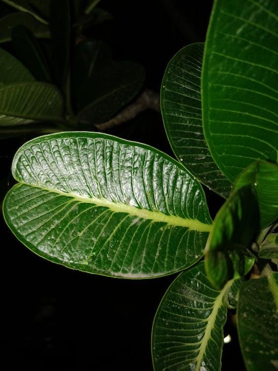 Botanisk, close-up, flora