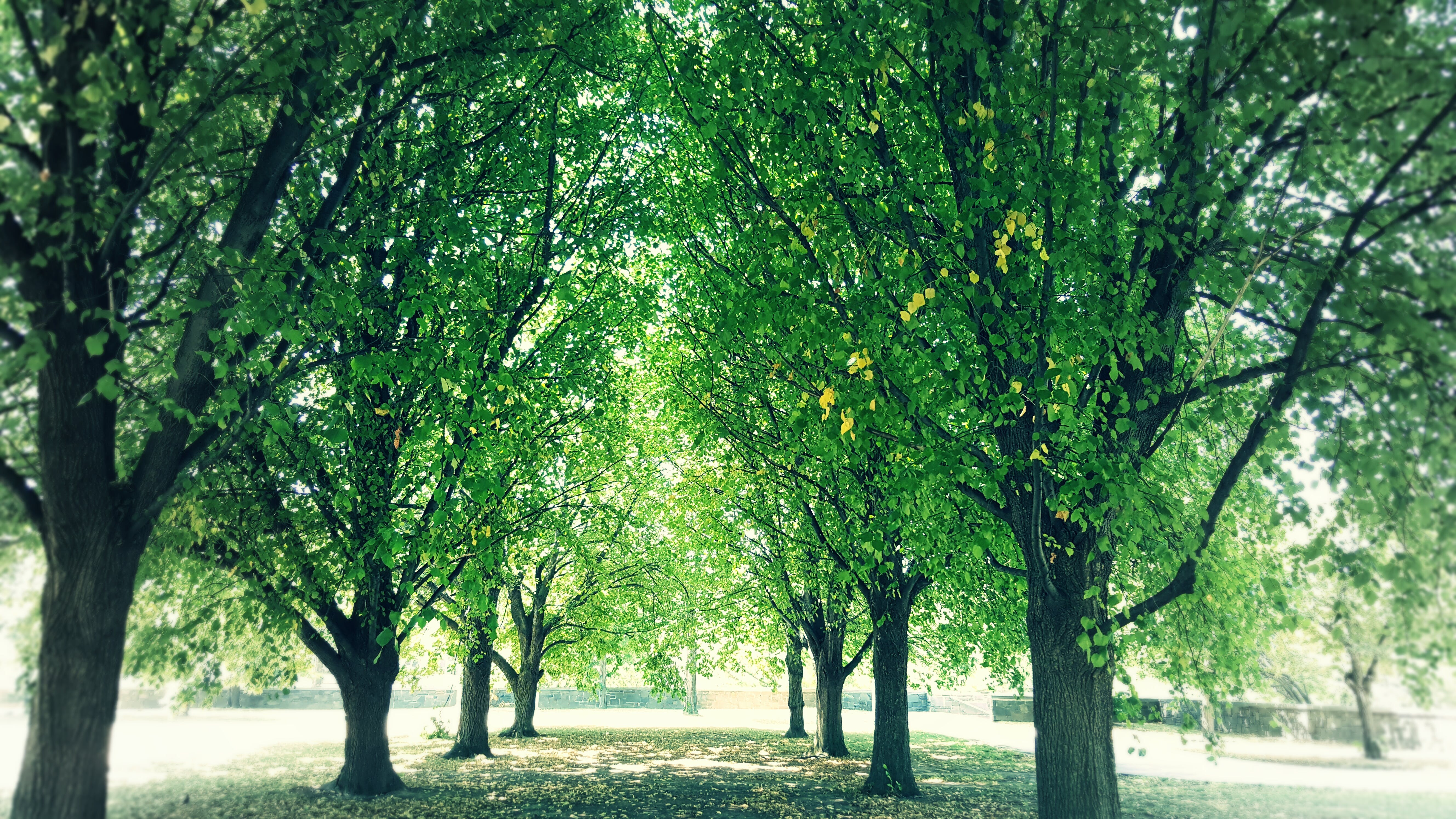 Free stock photo of cool, green, shade, sunlight