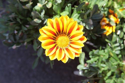Бесплатное стоковое фото с красивые цветы