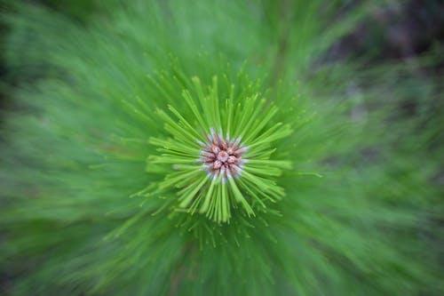Бесплатное стоковое фото с дерево, сосна