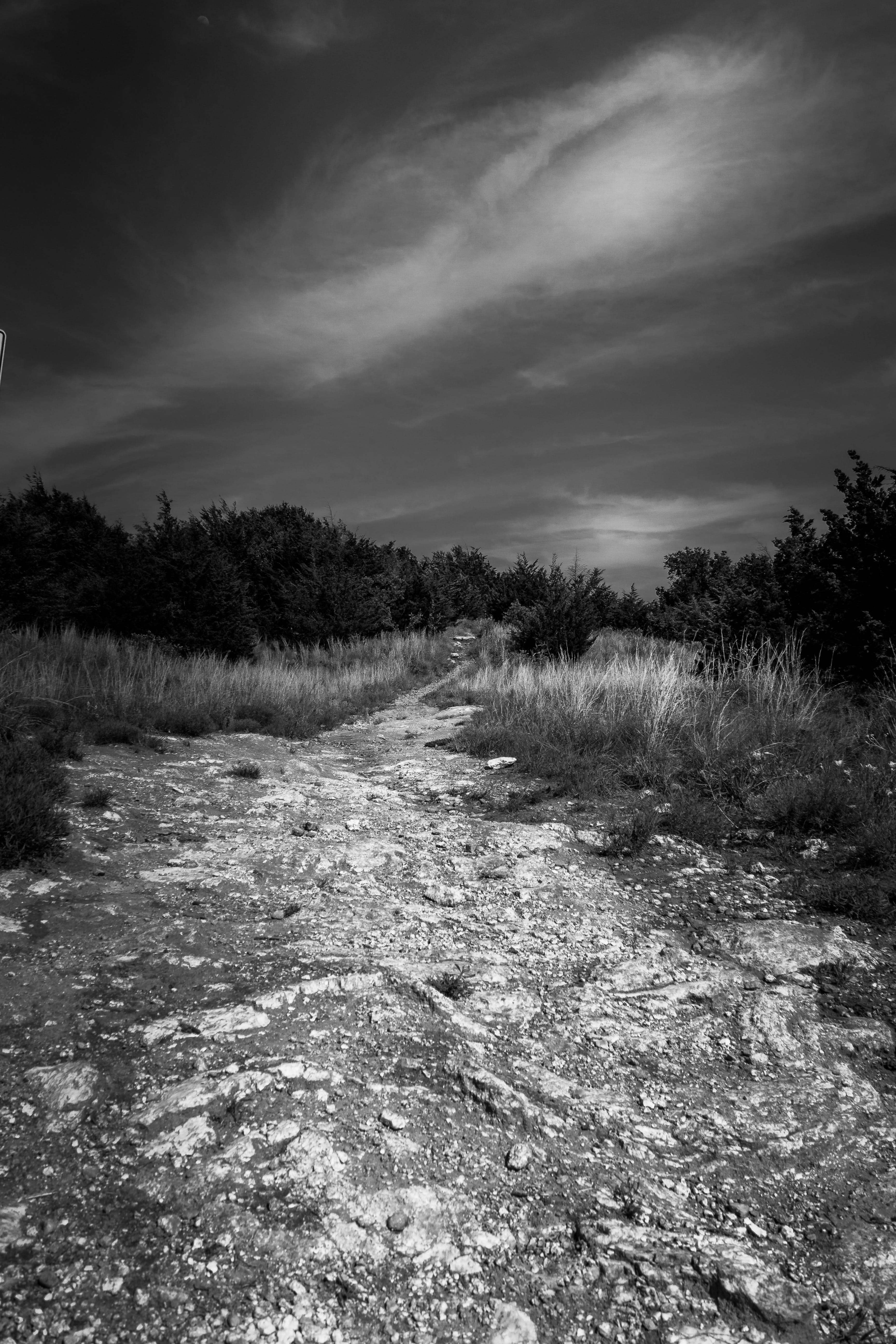 Free stock photo of black and white, landscape, nature park, path