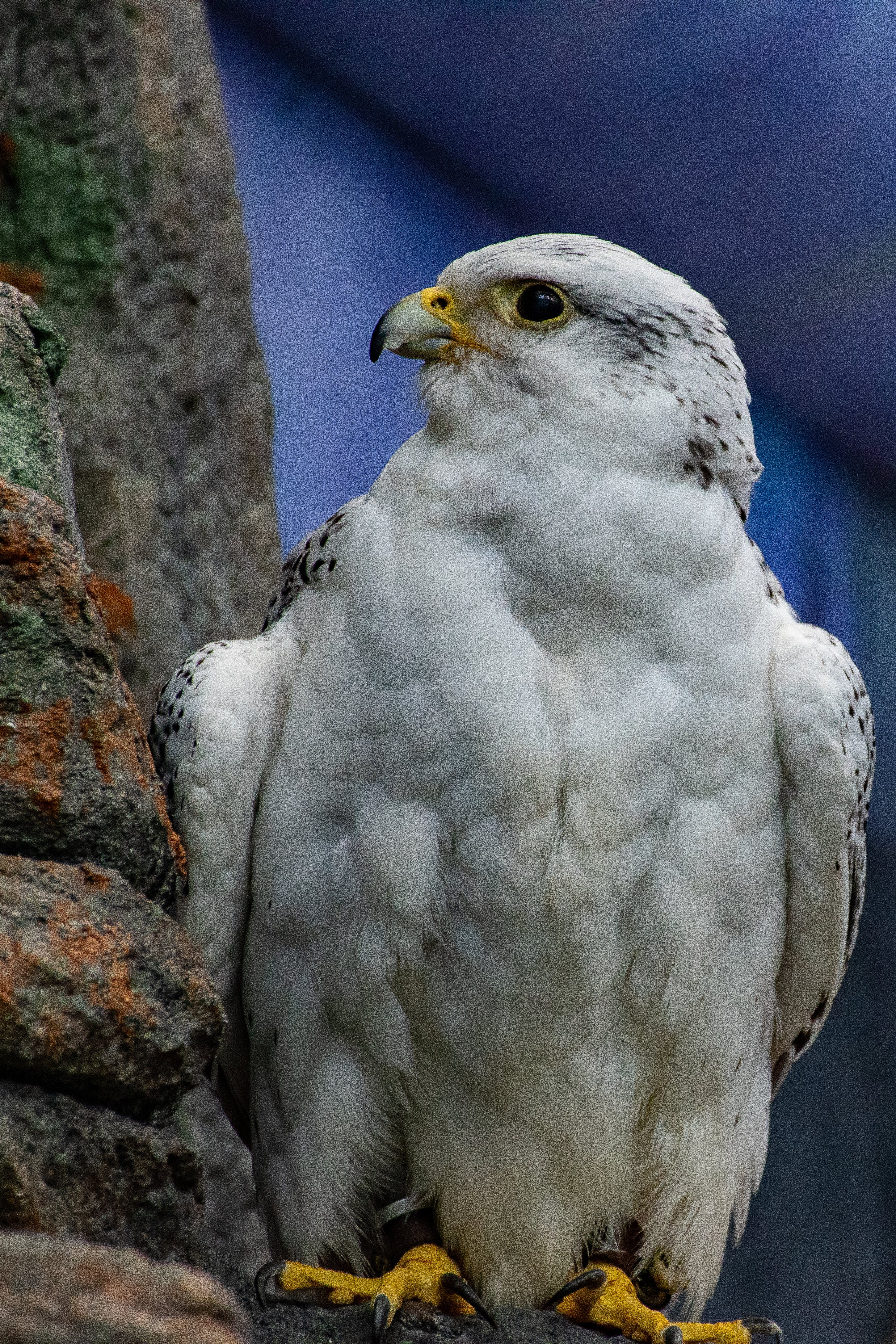 Selective Focus Photo of White and Black Hawk Perching on Gray Concrete Pavement