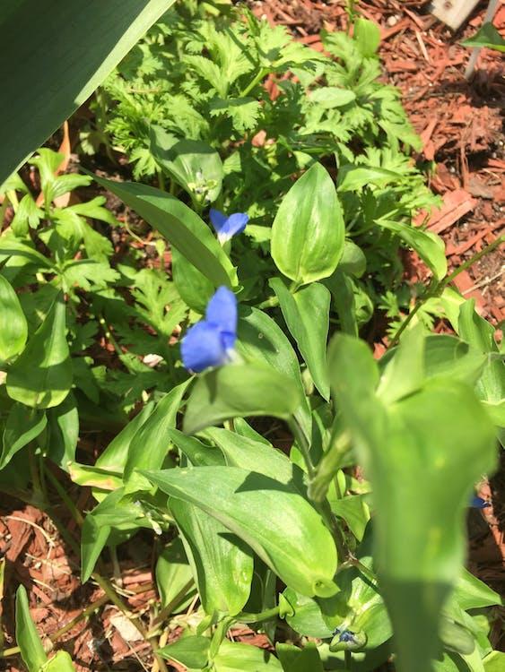 Free stock photo of Vines. Tiny flower