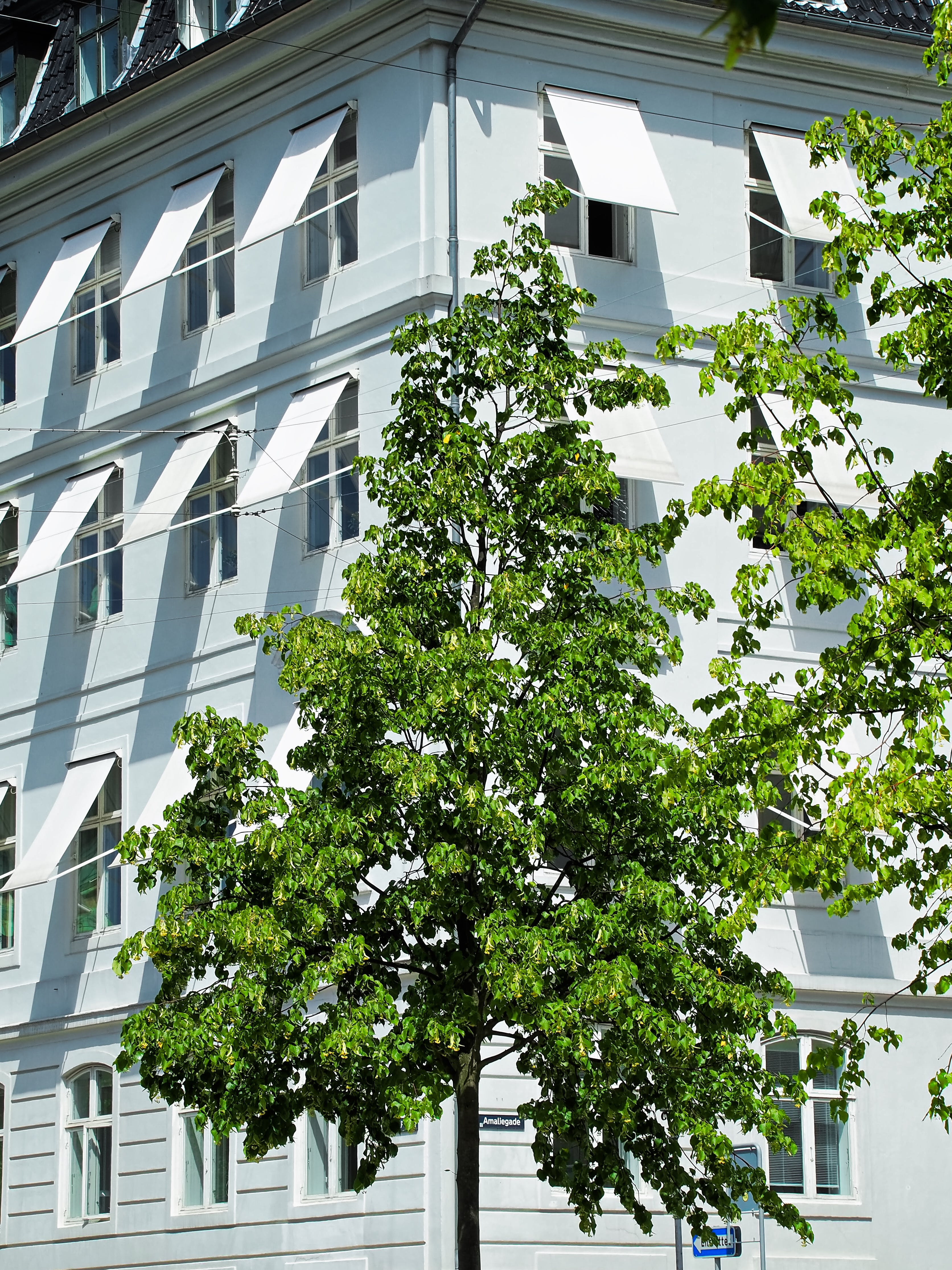 Green Leafed Tree in Front of White Building