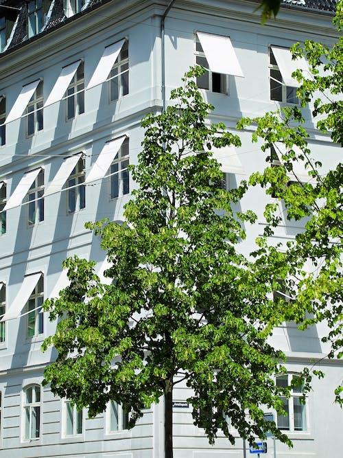 ガラス窓, シティ, モダン, 外観の無料の写真素材