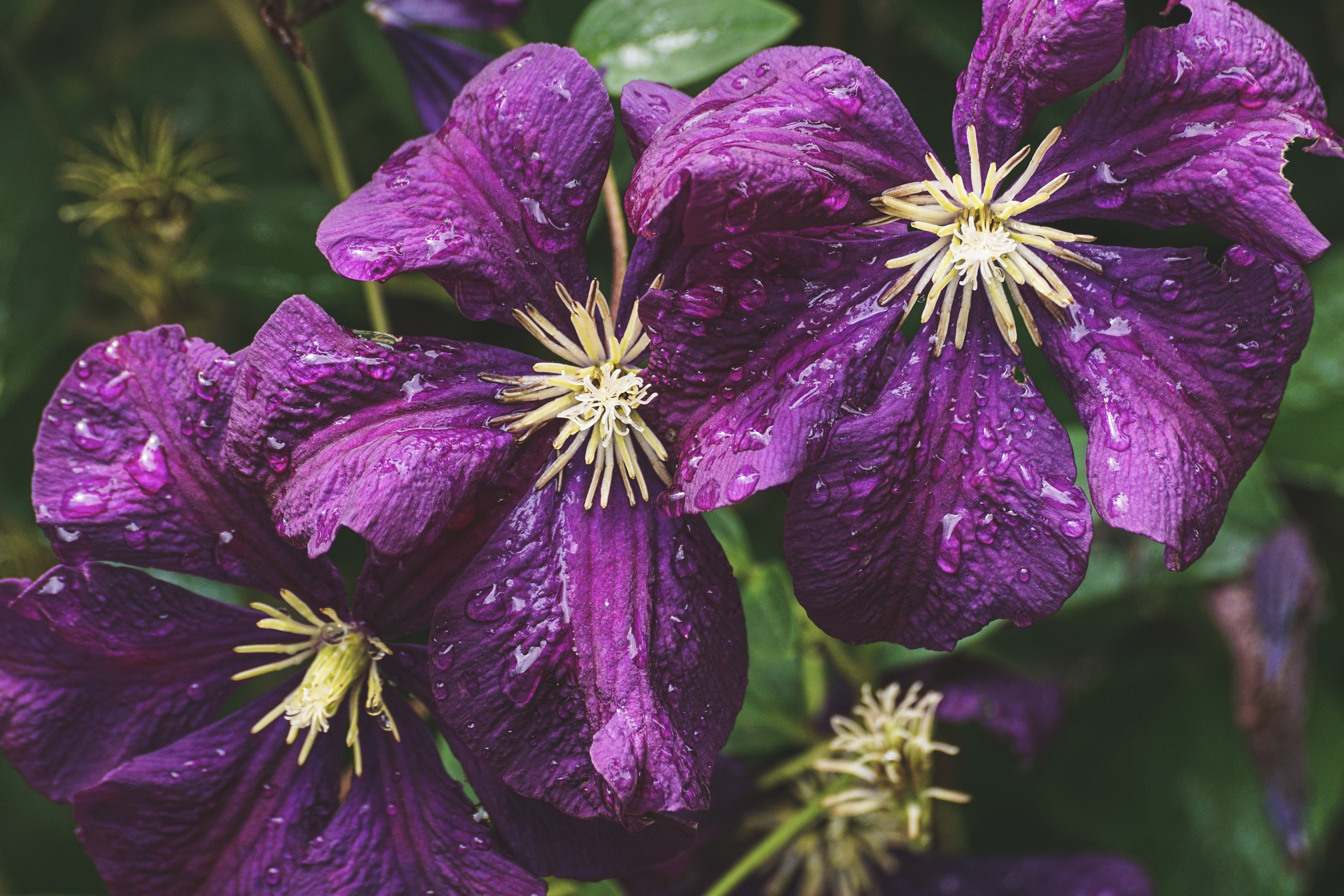 Closeup Photo of Purple Petaled Flowers