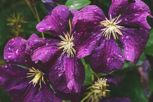 Foto d'estoc gratuïta de bonic, botànic, brillant, flora