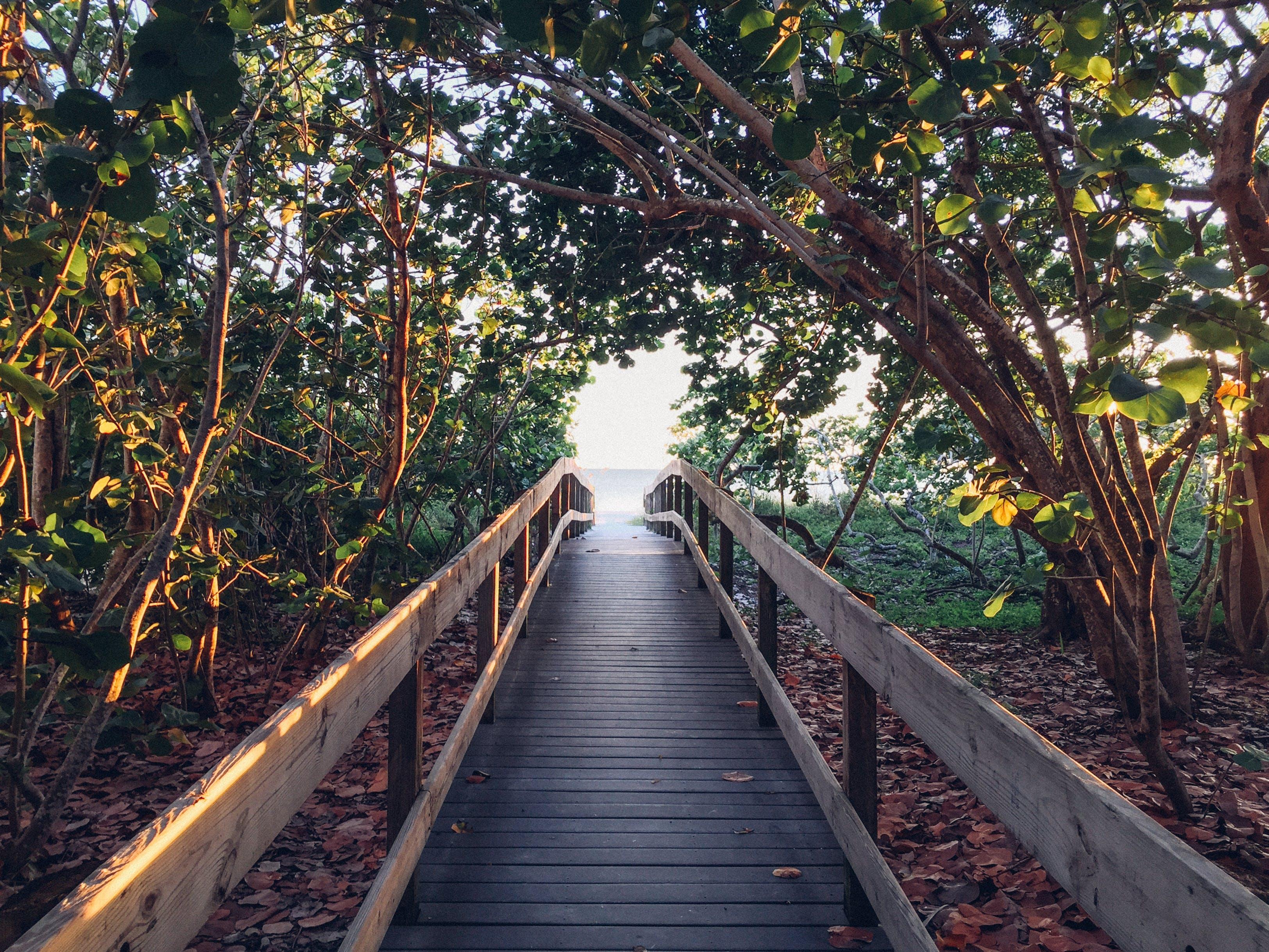 Foto profissional grátis de árvores, calçadão, filiais, litoral