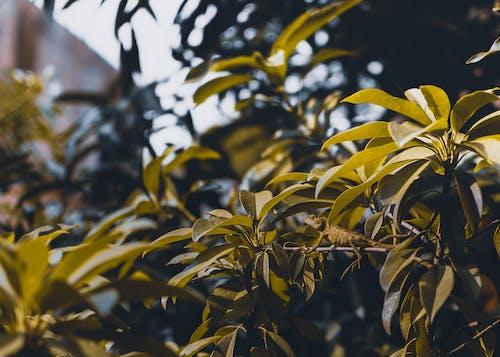 Gratis stockfoto met beest, blurry achtergrond, dag, daglicht