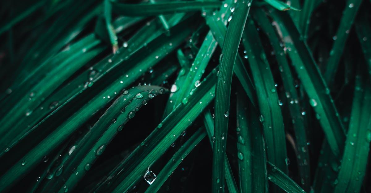 средство обработка фото когда трава изумрудного цвета днях