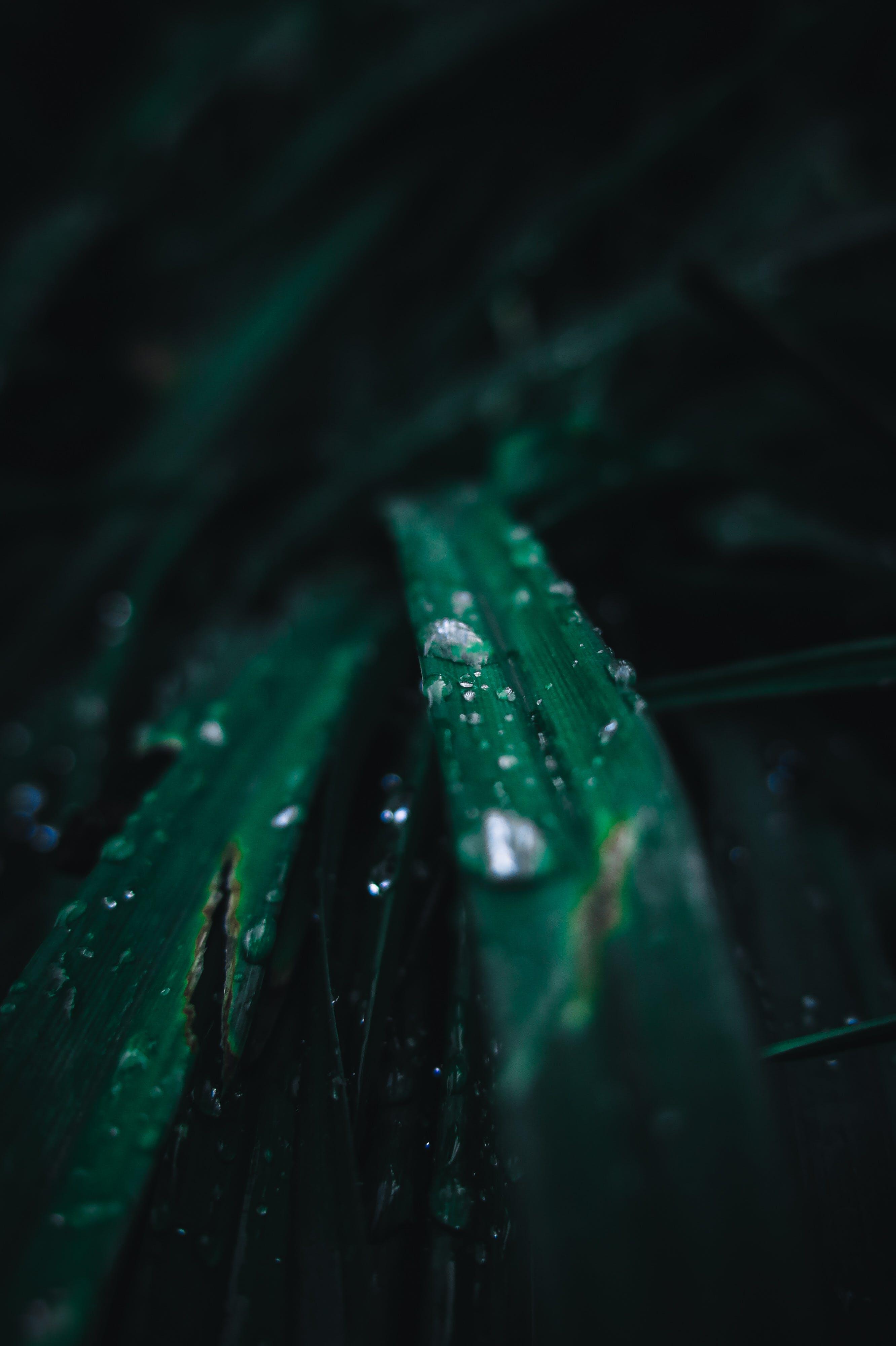 Imagine de stoc gratuită din apă, culoare, fir de iarbă, fotografie de aproape