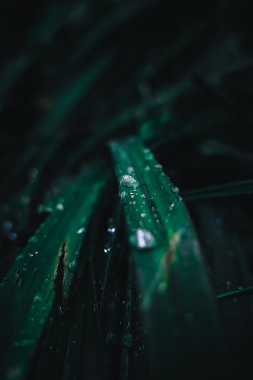 Closeup Photo of Water Drops in Linear Leaf Plant