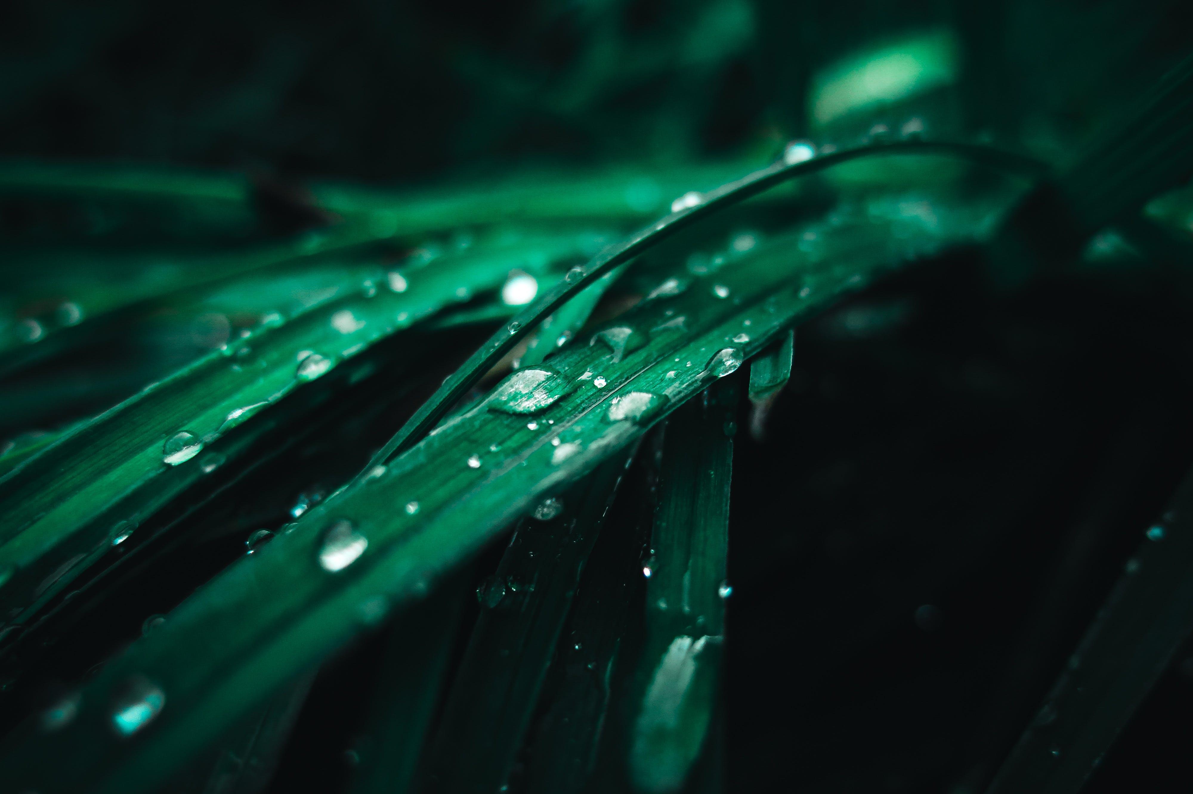 Foto d'estoc gratuïta de bri d'herba, color, flora, fons de pantalla