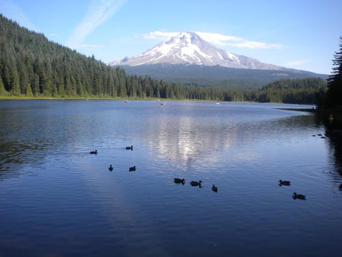 Free stock photo of Trillium Lake with Mt. Hood