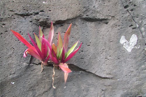 Free stock photo of plant on rock wall with natural heart next to it.