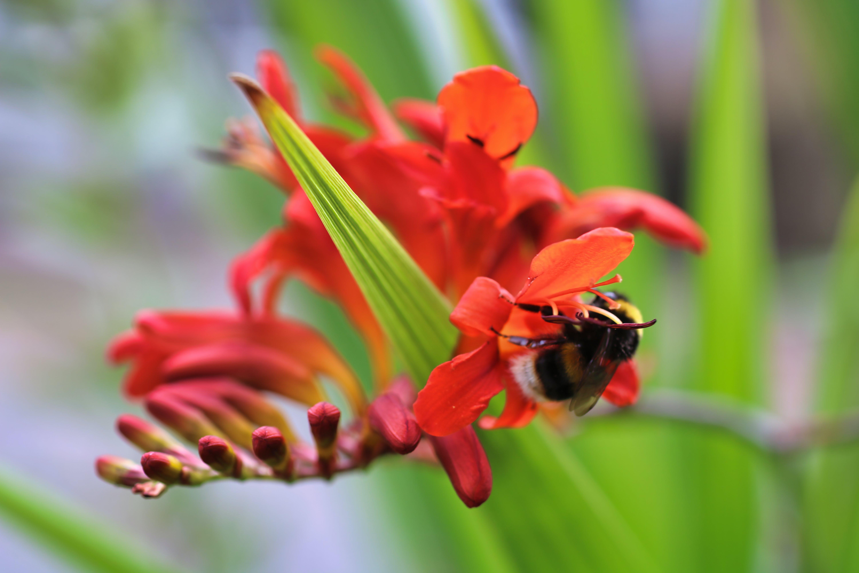 Free stock photo of bee, dark green, dark green plants, dark greens