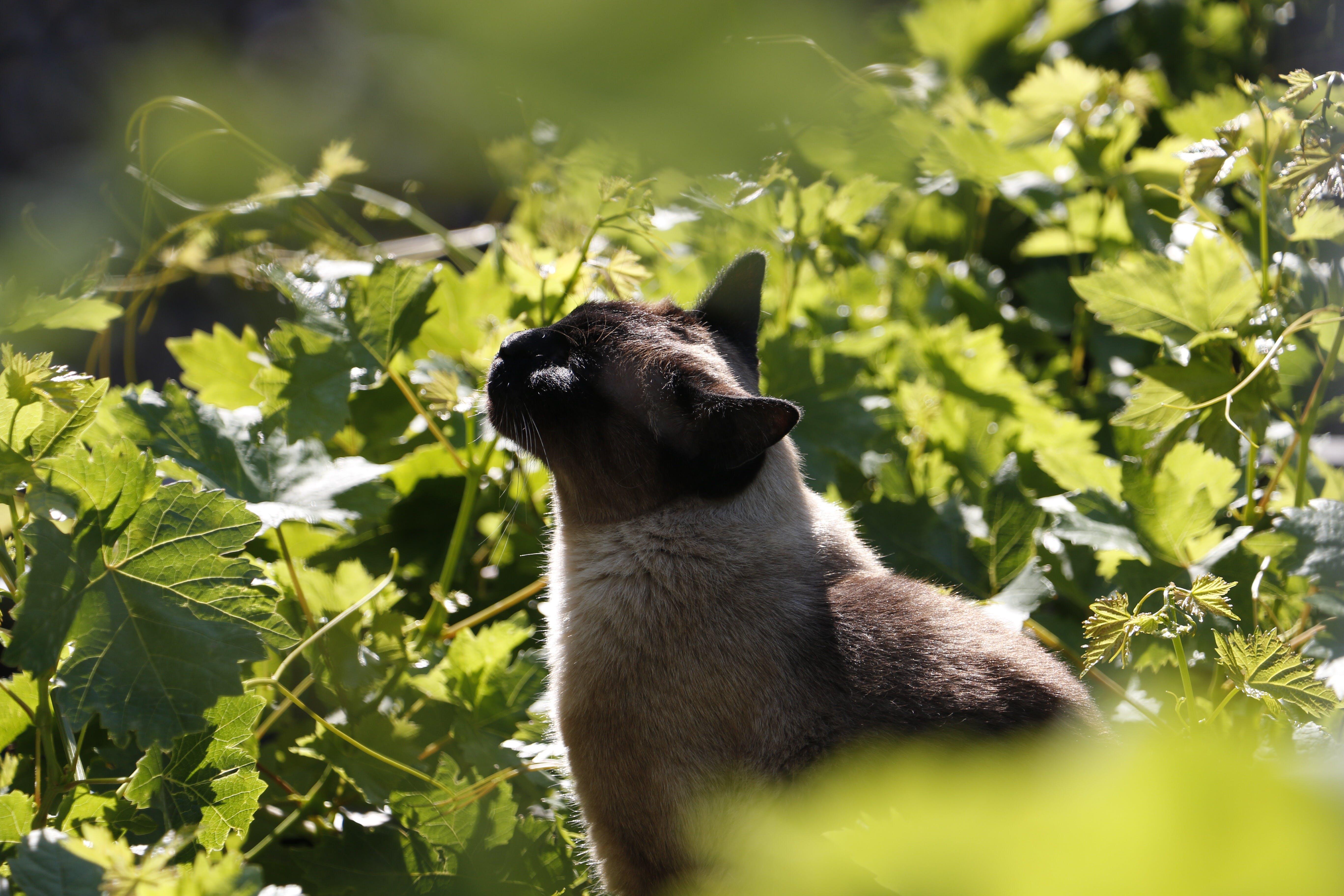 Cat Beside Green Leafed Plants