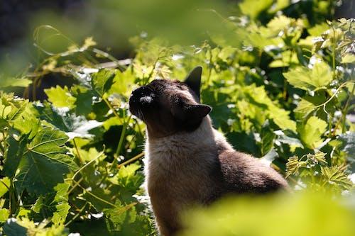 Fotos de stock gratuitas de adorable, animal, animal domestico, felino