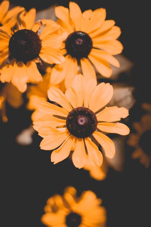 Бесплатное стоковое фото с желтые цветы, красивые цветы, красивый, лепестки