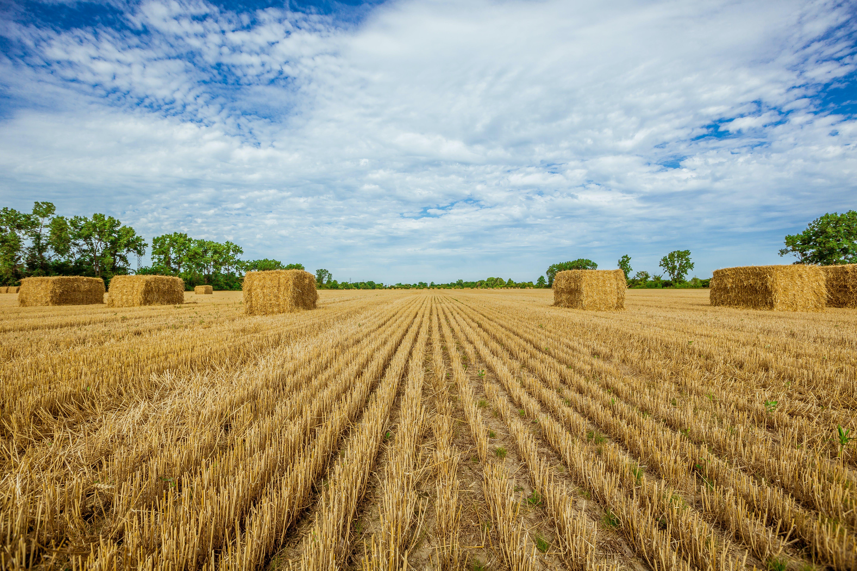 Free stock photo of field, summer, grass, harvest