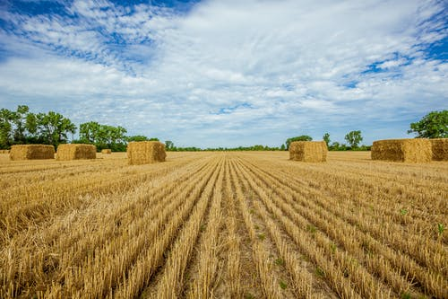 Free stock photo of 42 North, 42North.ca, bales, blue sky