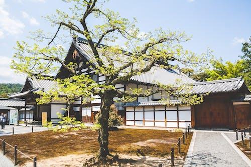 Бесплатное стоковое фото с азиатский, архитектура, дерево, деревья