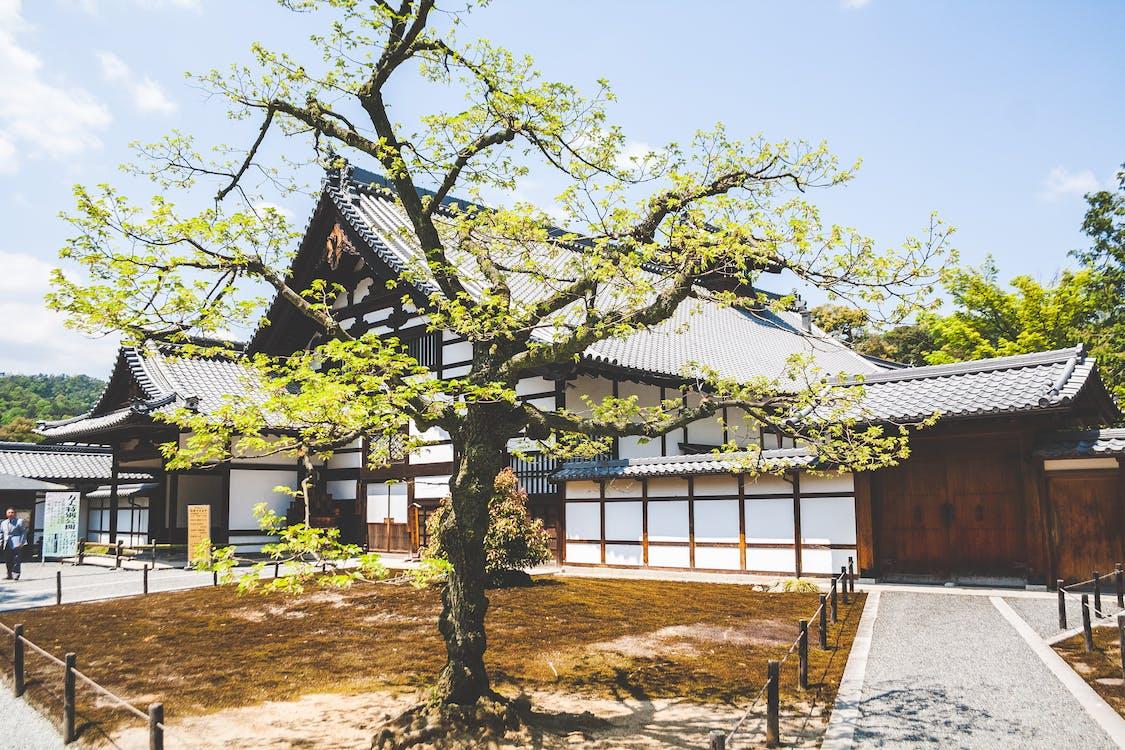 alberi, architettura, Asiatico