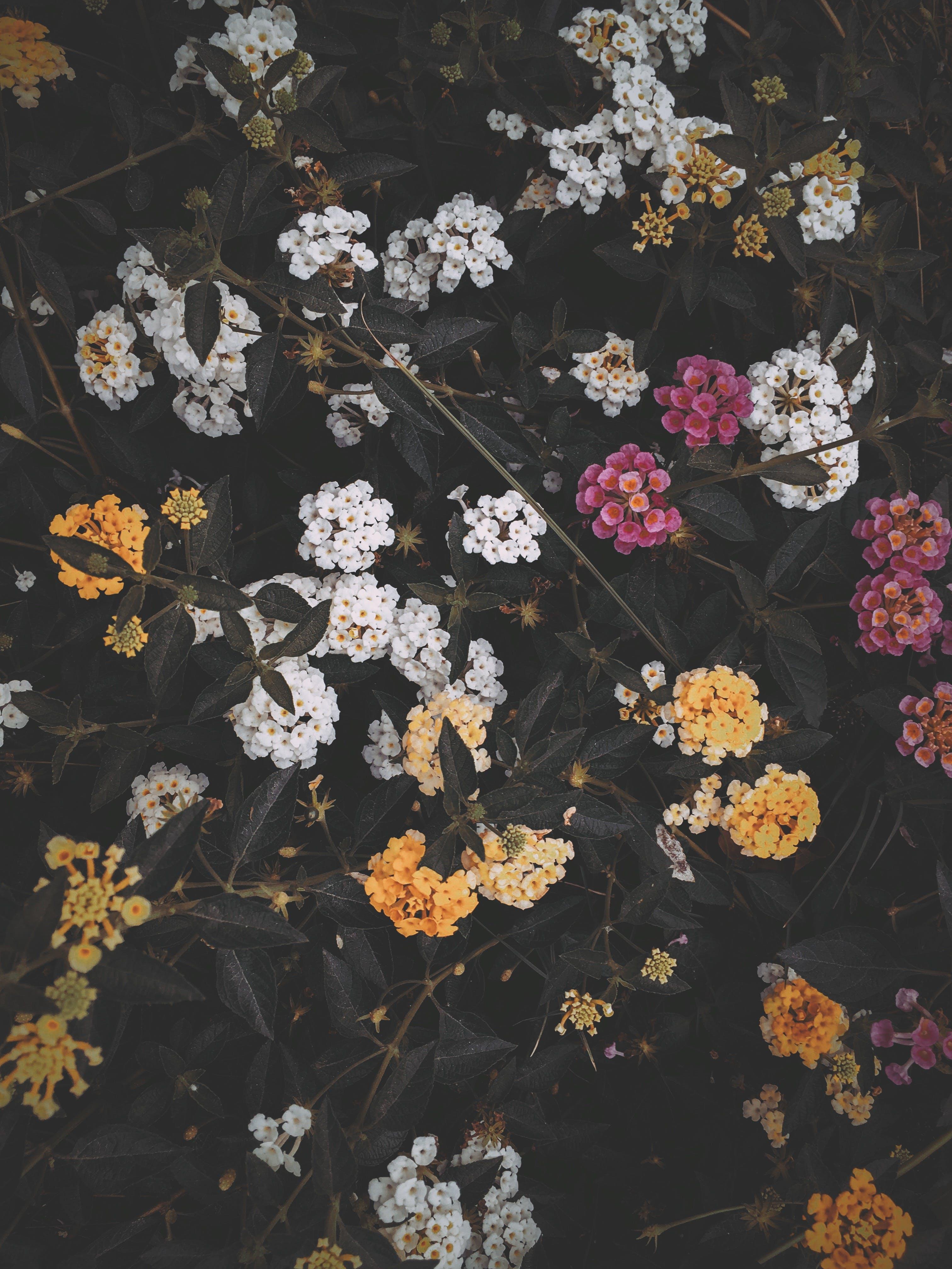 Free stock photo of beautiful flowers, blossom, flower, nature
