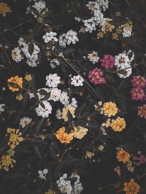 คลังภาพถ่ายฟรี ของ ดอกไม้สวย, ธรรมชาติ