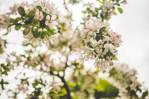 Imagine de stoc gratuită din anotimp, arbore, colorat, creangă