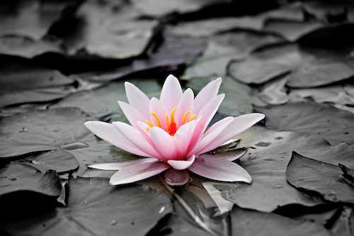 Základová fotografie zdarma na téma flóra, HD tapeta, krásný, kvést
