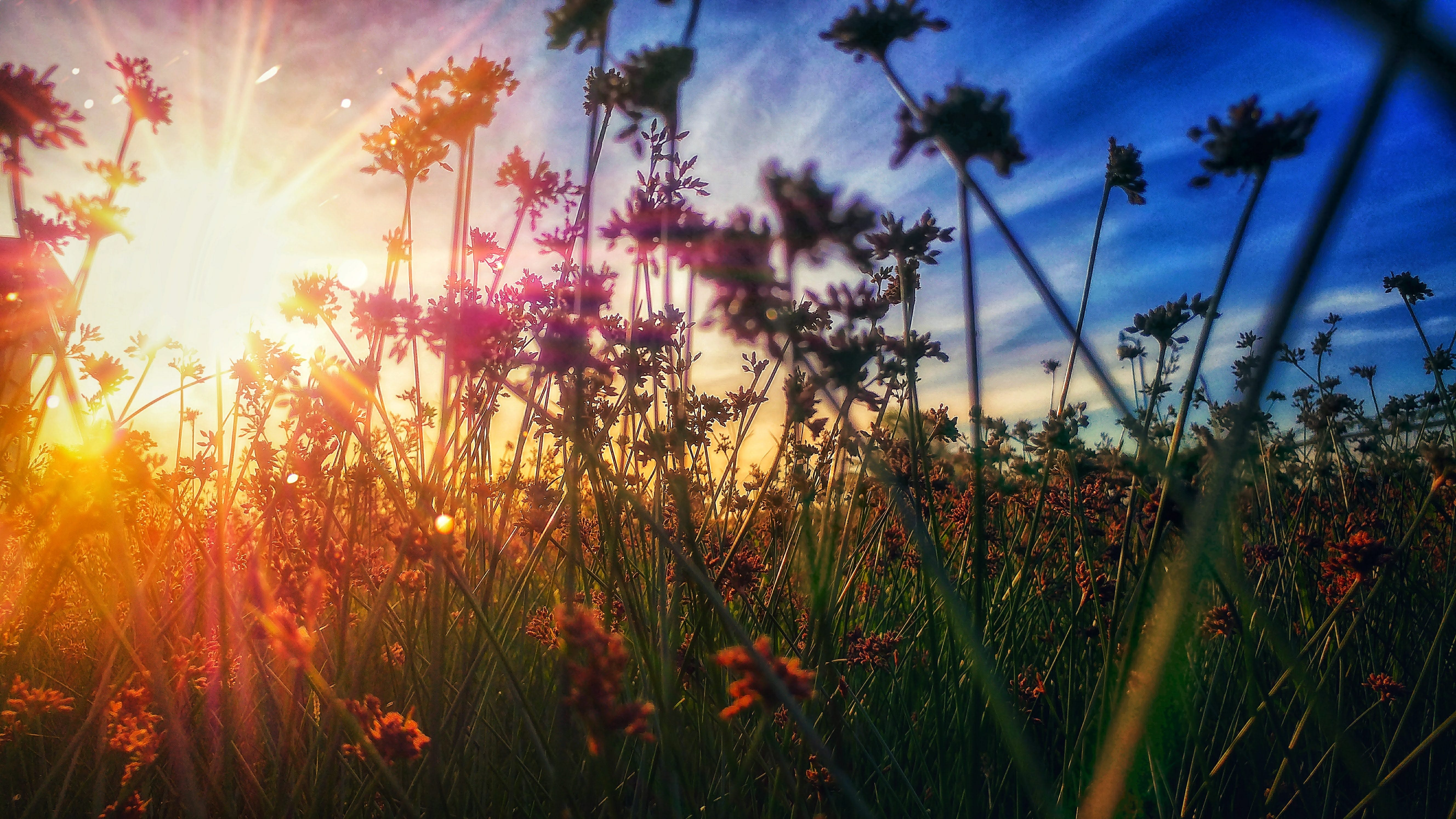 Free stock photo of beautiful, blue skies, colorful, Grassy Fields