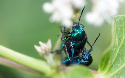 Darmowe zdjęcie z galerii z chrząszcz