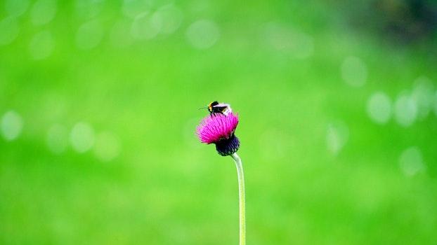 Free stock photo of nature, field, garden, grass