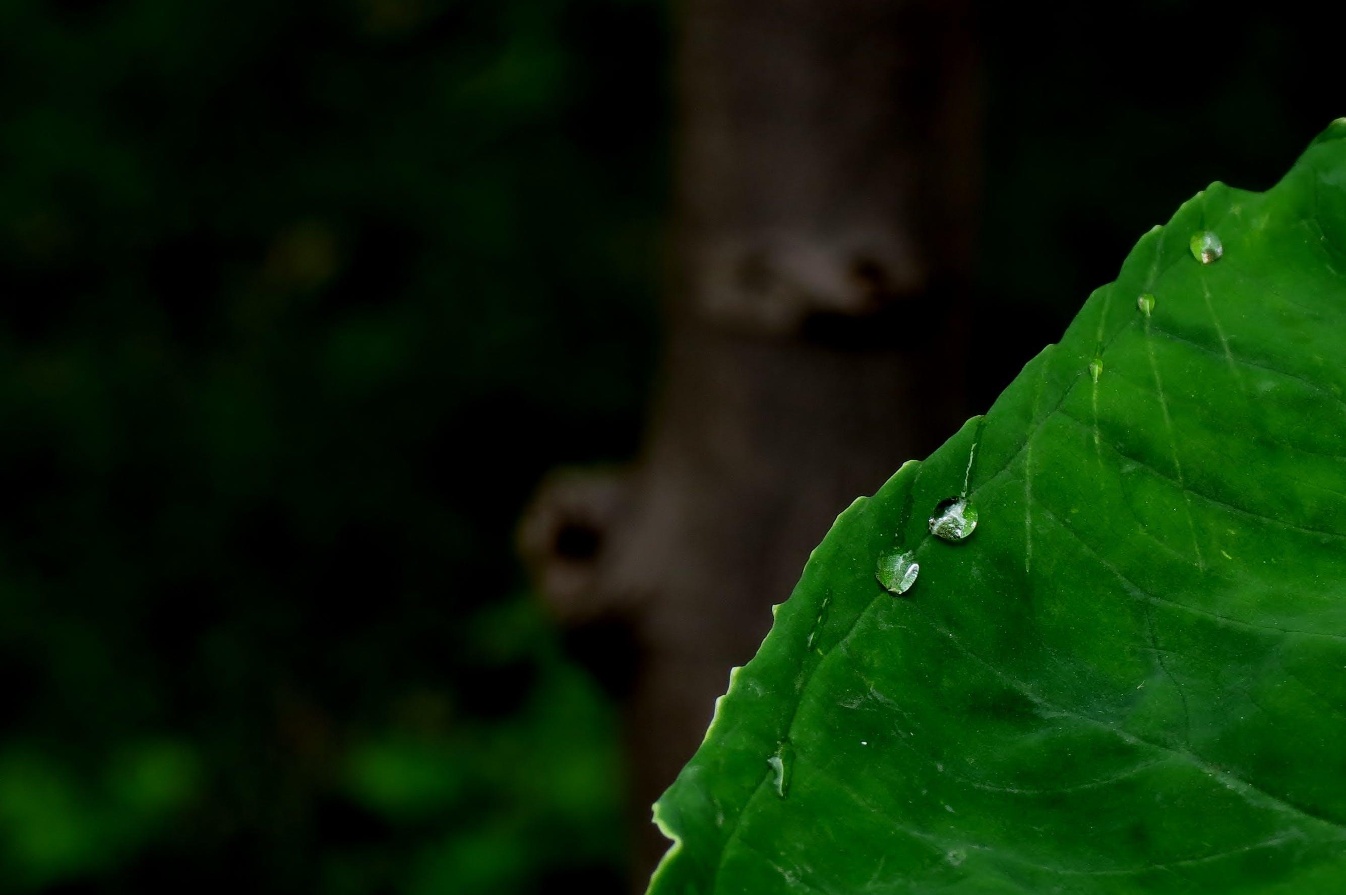 Foto profissional grátis de gotas d'água