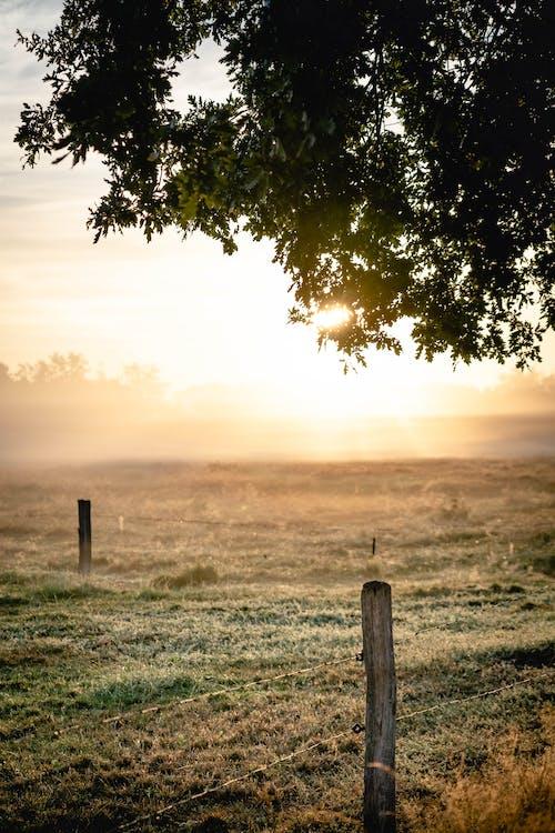 Gratis lagerfoto af bagbelyst, bane, græs, himmel